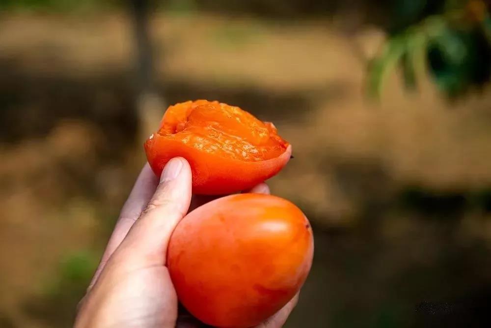 柿子18.jpg