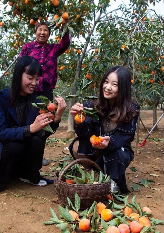 柿子6.jpg