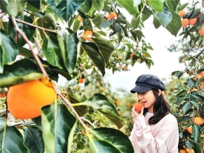 柿子5.jpg